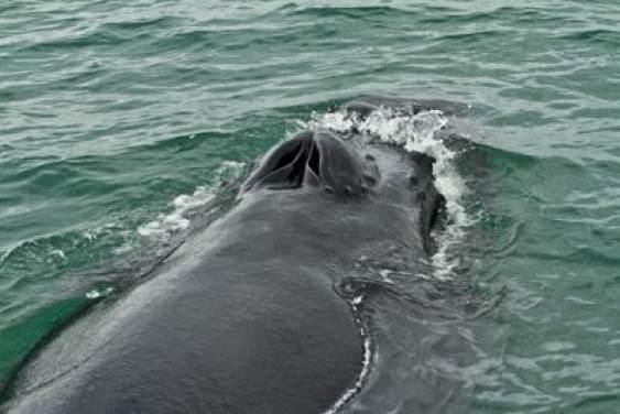 obseravation baleine en Islande dans fjord