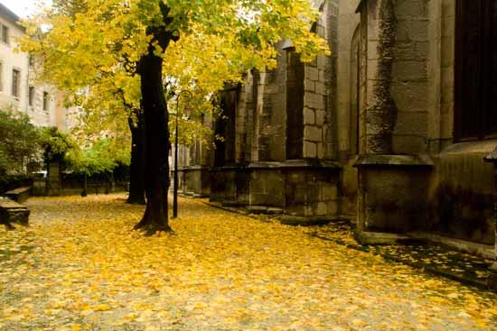 rue-et-arbre-chambéry-savoie