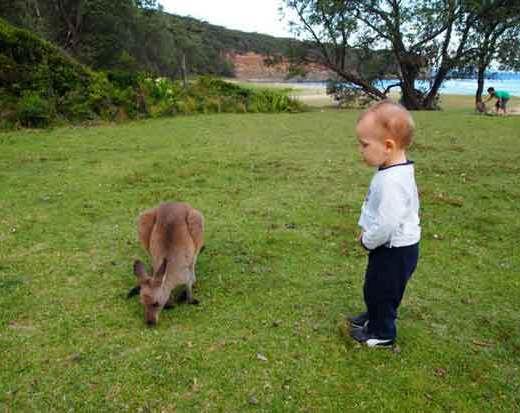 KANGOUROU-australie-bébé