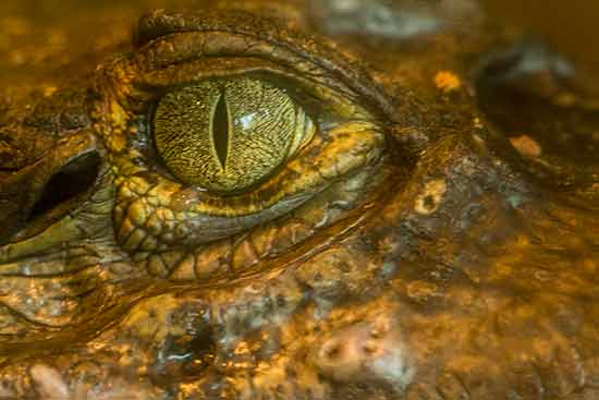 crocodile-zoo-saint-martin-la-plaine