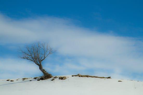 arbre-dans-neige-bauges