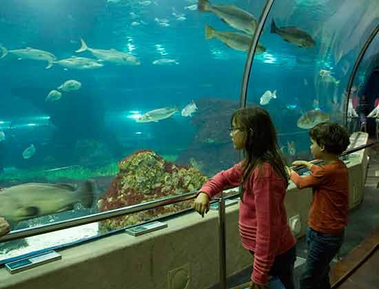 Aquarium-barcelone-avec enfants-océanorium