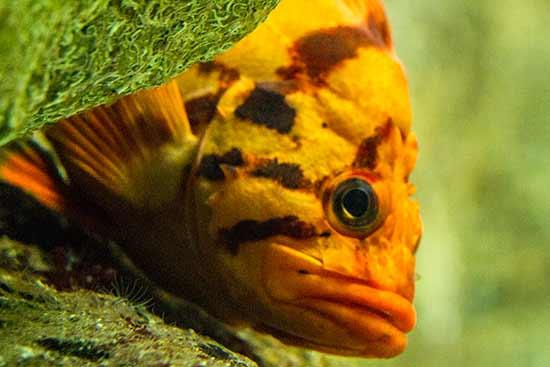 poisson-oceanorium-lisbonne