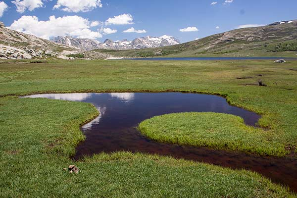 Pozzines-au-lac-Nino-en-Corse