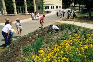 Rain Garden Edgewood College