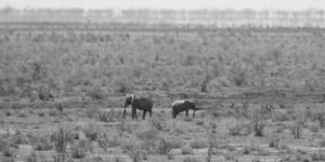 Claudia Greiner Tsavo East National Park