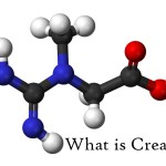 Everything you need to know about: Creatine