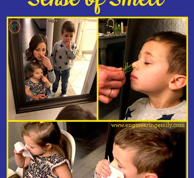 Exploring the Five Senses for Babies, Toddlers, and Preschoolers: Sense of Smell