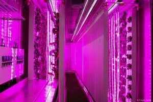 In den Containern von Freight Farms wächst Gemüse unter genau definierten Bedingeungen (Bild: Freight Farms).