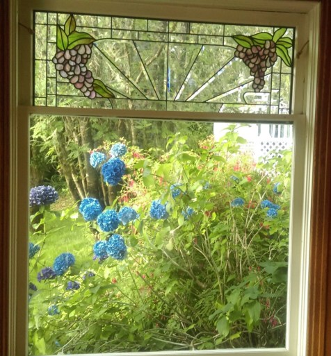 Blue Hydrangia