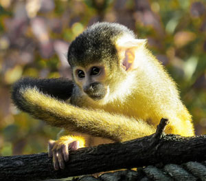 A Cute Monkey