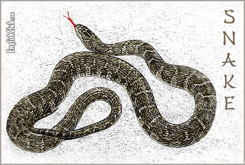 The Snake - Chinese Zodiac Animal