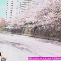 (4月) 花筏クルーズ/HANAIKADA CRUISE
