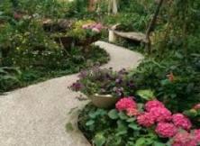 garden lanscape