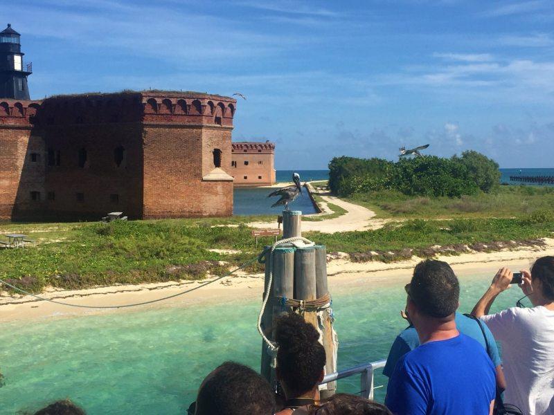 Recebidos por pelicanos na chegada ao Dry Tortugas. Foto Enjoy Miami