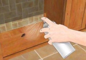 مكافحة حشرات فى الرياض
