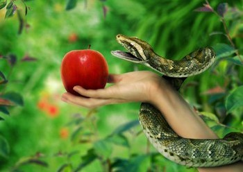 ¿Quisieron Adan y Eva comer una manzana?