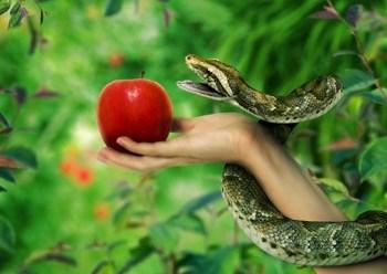 Quisieron Adan y Eva comer una manzana? - Enlace Judío