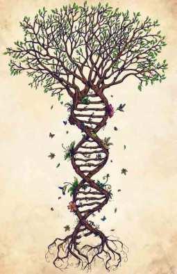Arbol-ADN-ecologia-tora
