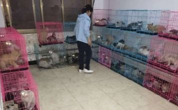 Rescatan 700 gatos que estaban destinados a ser cocinados en locales de comida en Linfen, provincia de Shanxi, al norte de China
