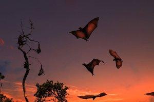 Un nuevo estudio de la Universidad de Tel Aviv ha demostrado que los murciélagos nacen de forma inherente conociendo la velocidad del sonido