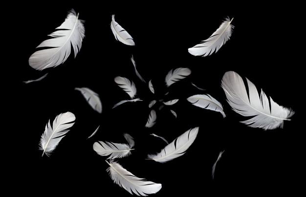 plumas de ángeles