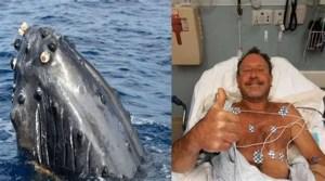 En una historia que recuerda a la de Jonás bíblico, un buzo fue tragado entero por una ballena jorobada en Massachusetts y sobrevivió para contarlo