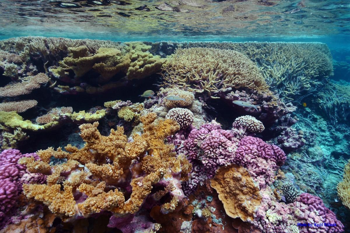 Una expedición científica liderada por Israel zarpó desde Eilat hacia Port Sudan, en un proyecto con investigadores sudaneses para preservar arrecifes de coral del Mar Rojo