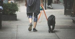 Persona con un perro