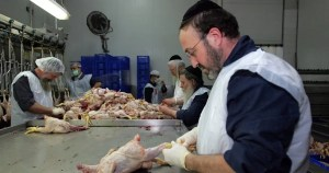Judíos religiosos manipulando pollo