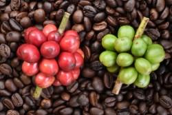 coffee commodity