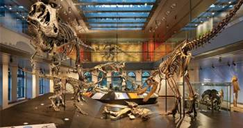 Focus Lighting: Lights the Natural History Museum in LA