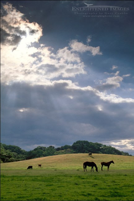 Image: Storm clouds sand sunbeam rays in blue sky over horses in green grass spring pasture on ranch in Santa Clara County, California
