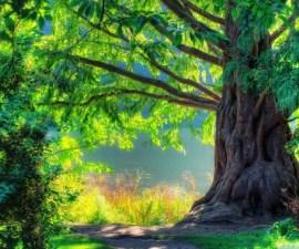 beautiful_tree_2-wallpaper-1024x576