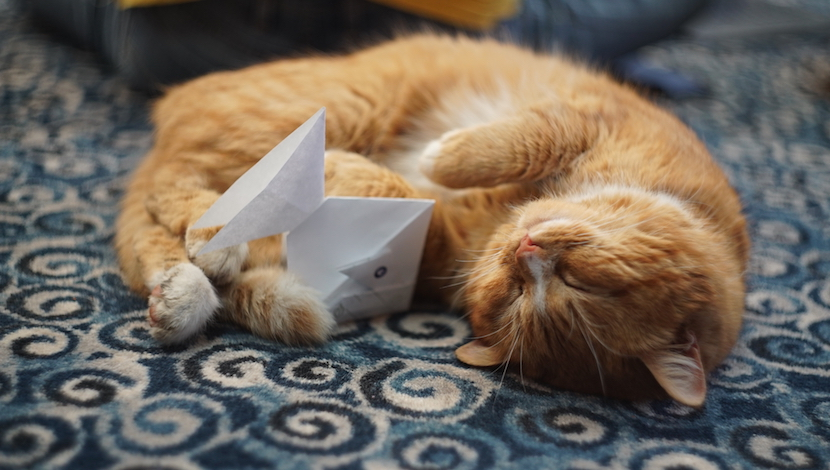 cat-with-origami