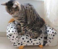 Reseña de Cuando el amor despierta: gato luchando contra el sueño