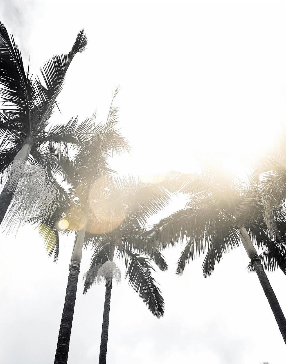 palmiers grande barrière de corail