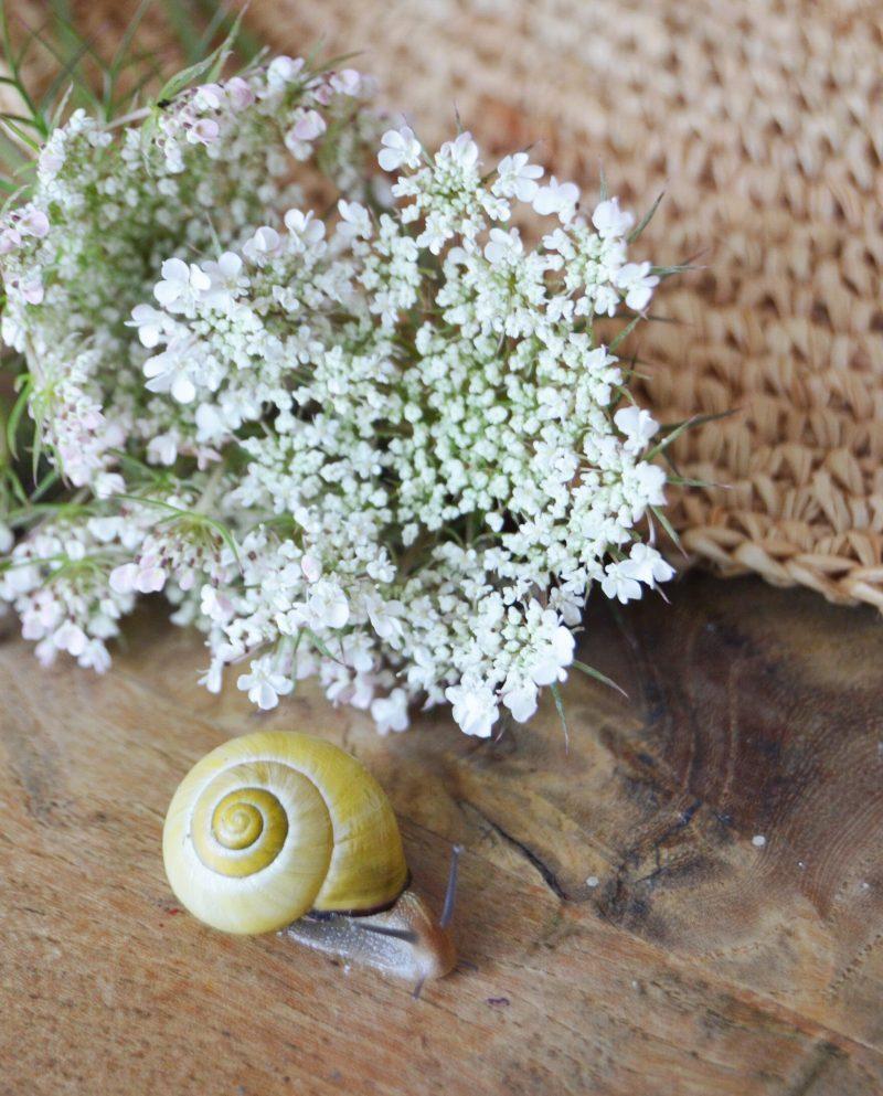 les soins bio à la bave d'escargot mlle Agathe