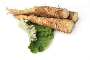 牛蒡 Burdock root