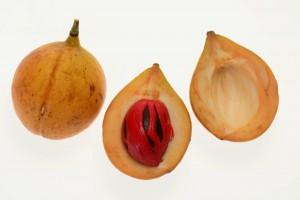 豆蔻果 (Nutmeg)