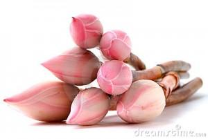 bunga kantan