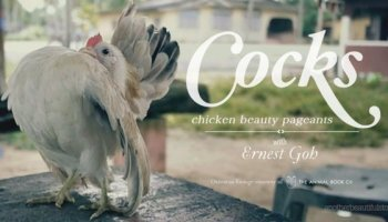 Concours de beauté des Poulets