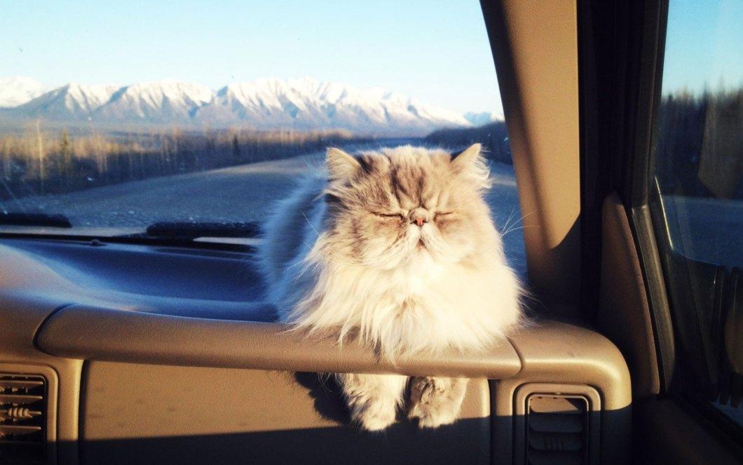 Road-Trip-Cats-voyager avec un chat