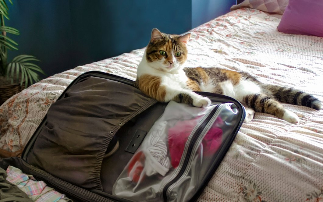 Travel-Packing-Cats-voyager avec un chat