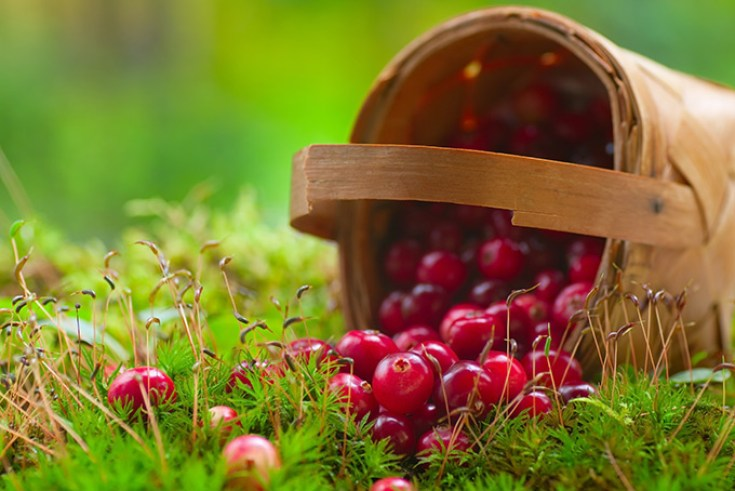 680-cranberries-basket