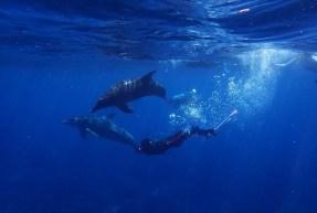 28. Mit Delfinen schwimmen