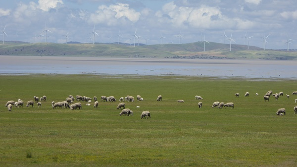 Sheep in front of Lake George with water in it.