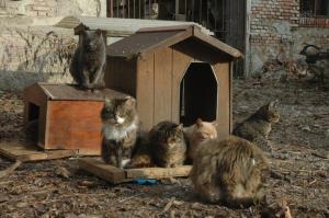gatti-oasi