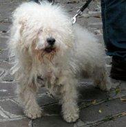 ns-cane bolognese