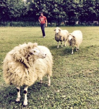 NS-pecore nuova casa 3327